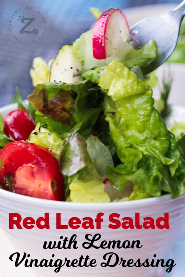 closeup of a forkful of red leaf salad with lemon vinaigrette, with fresh dill, radishes, grape tomatoes and peppers, with red leaf salad in a white bowl